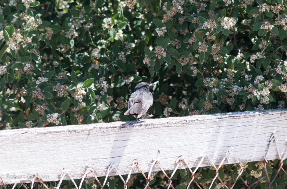 Willy Wag tail on fence