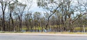 Tyrrell Creek Floods